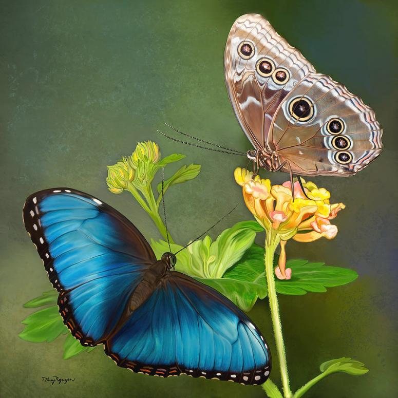 blue-morpho-butterflies-thanh-thuy-nguyen